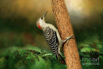 Red Bellied Woodpecker Photograph - Red Bellied In Search Of Food by Darren Fisher