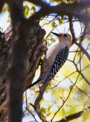 Red Bellied Woodpecker Digital Art - Red-bellied Woodpecker by Chris Flees
