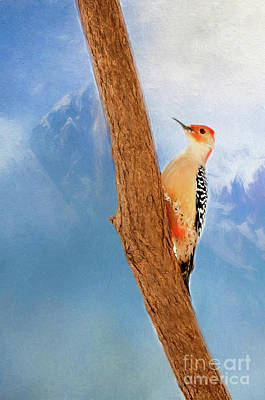Red Bellied Woodpecker Digital Art - Red Bellied Woodpecker by Darren Fisher