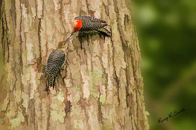 Digital Art - Red-bellied Woodpecker Feeding Young. by Rusty R Smith