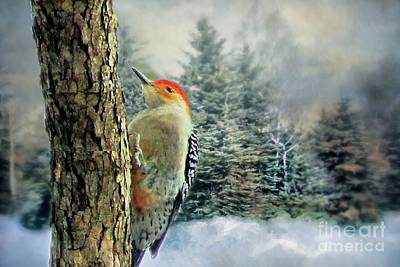 Photograph - Red Bellied Woodpecker  by Janette Boyd