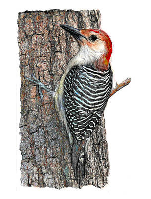 Digital Art - Red Bellied Woodpecker On Tree by Yuichi Tanabe