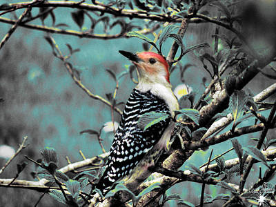 Photograph - Red Bellied Woodpecker by Scott Hovind