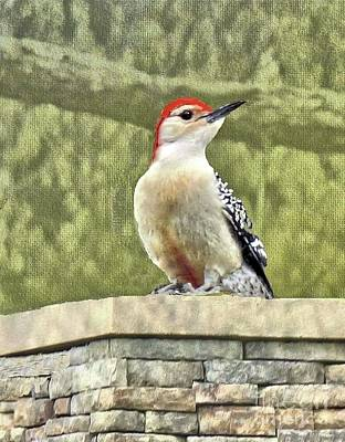 Photograph - Red-bellied Woodpecker Sighting In March by Janette Boyd