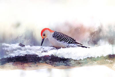 Woodpecker Mixed Media - Red-bellied Woodpecker Snow Day by Barbara Hymer