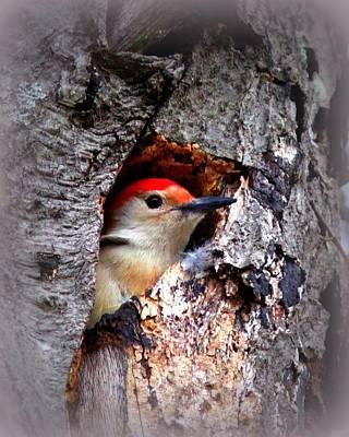 Photograph - Red-bellied Woodpecker by Travis Truelove