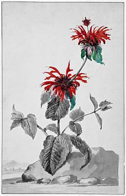 Digital Art - Red Bergamot In A Landscape II - Selective Color by Ruth Moratz