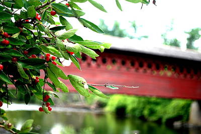 Photograph - Red Berries And A Bridge by Emily Stauring
