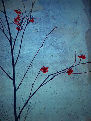 Red Berries Blue Sky Art Print