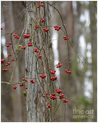 Photograph - Red Berries by Carol  Bradley