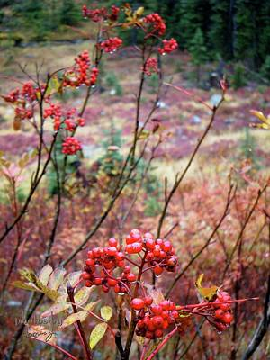 Photograph - Red Berries by Jamie Johnson
