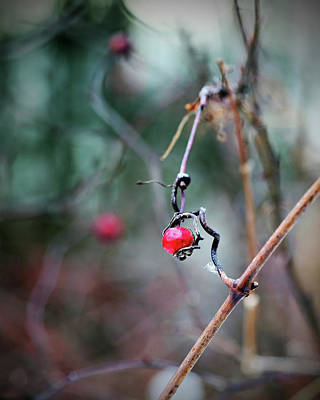 Photograph - Red Berries On Deep Emerald Green  by Brooke T Ryan