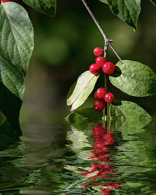 Digital Art - Red Berries - Reflections by Ron Grafe