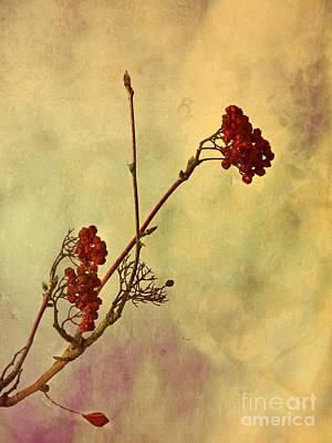 Photograph - Red Berries by Tara Turner