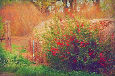 Photograph - Red Berry Bush And Hay Rolls by Anna Louise