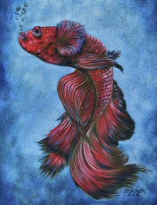 Red Betta Art Print