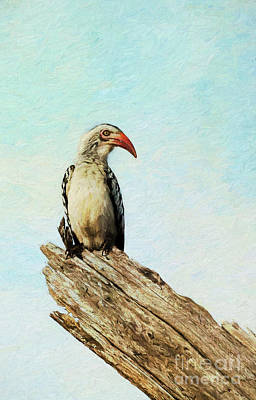 Digital Art - Red Billed Hornbill by Liz Leyden