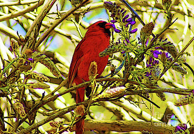 Digital Art - Red Bird Eating Wisteria by Kim Pate