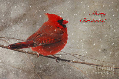 Red Bird In Snow Christmas Card Art Print by Lois Bryan