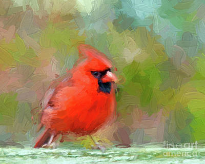 Photograph - Red Bird by Kerri Farley