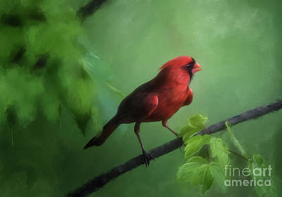 Red Bird On A Hot Day Art Print by Lois Bryan