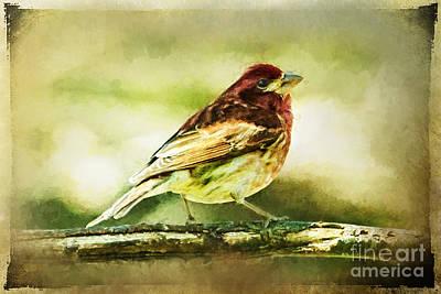 Christina Digital Art - Red Bird On Branch Ginkelmier Inspired by Christina VanGinkel