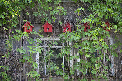 Photograph - Red Birdhouses by Idaho Scenic Images Linda Lantzy
