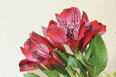Photograph - Red Blooms Poster Art by Margie Avellino