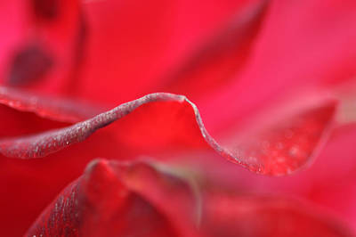 Photograph - Red Blossom 3 by Dubi Roman