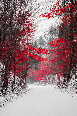 Snowstorm Photograph - Red Blossoms  by Parker Cunningham