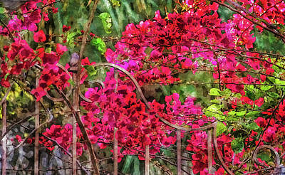 Photograph - Red Bougainvillea by HH Photography of Florida