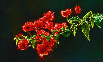 Photograph - Red Bougainvillea Spray by HH Photography of Florida