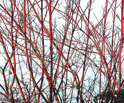 Photograph - Red Branches by David Pantuso