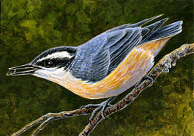 Painting - Red-breasted Nuthatch Aceo by Shari Erickson