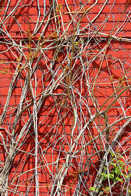 Photograph - Red Brick And Vines 10 by Mary Bedy