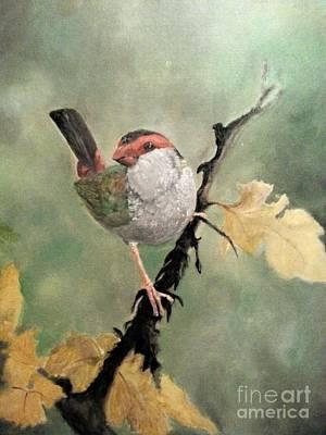 Jenna Thomas Wall Art - Painting - Red Brow Finch by Jennifer Thomas