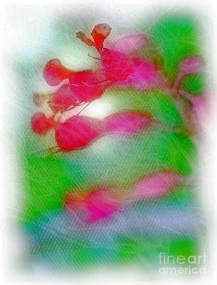 Red Buckeye Art Print