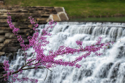 Devils Den Photograph - Redbud At Devils Den by James Barber