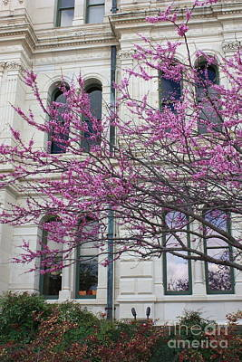 Photograph - Red Buds And San Antonio City Hall by Carol Groenen
