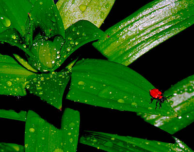 Photograph - Red Bug In The Rain by Mark Wiley