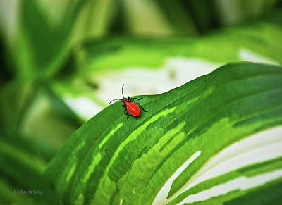 Red Bug On A Leaf Art Print