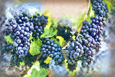 Red Bunch Of Grapes In The Vineyard Art Print