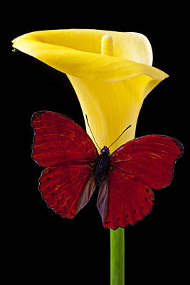 Red Butterfly And Calla Lily Art Print by Garry Gay