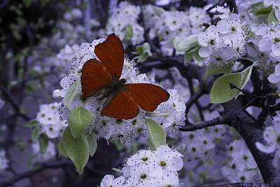 Red Butterfly On Cherry Blossoms Art Print