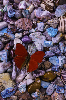 Red Butterfly On Colored Stones Art Print