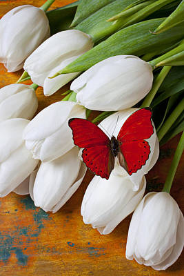 Peaceful Still Life Photograph - Red Butterfly On White Tulips by Garry Gay