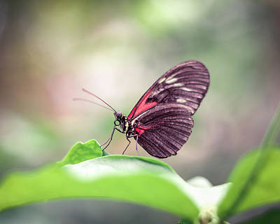 Photograph - Red Butterfly Posing On Leaf With Blurry Background by Open Range