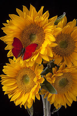 Red Butterfly With Four Sunflowers Art Print by Garry Gay