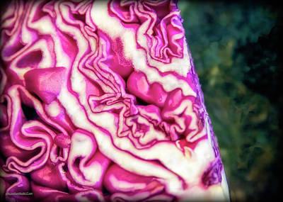 Photograph - Red Cabbage by LeeAnn McLaneGoetz McLaneGoetzStudioLLCcom