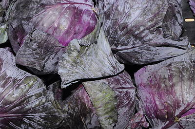 Red Cabbage Art Print